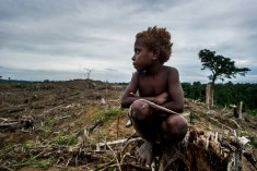 Resource Extraction in West Papua